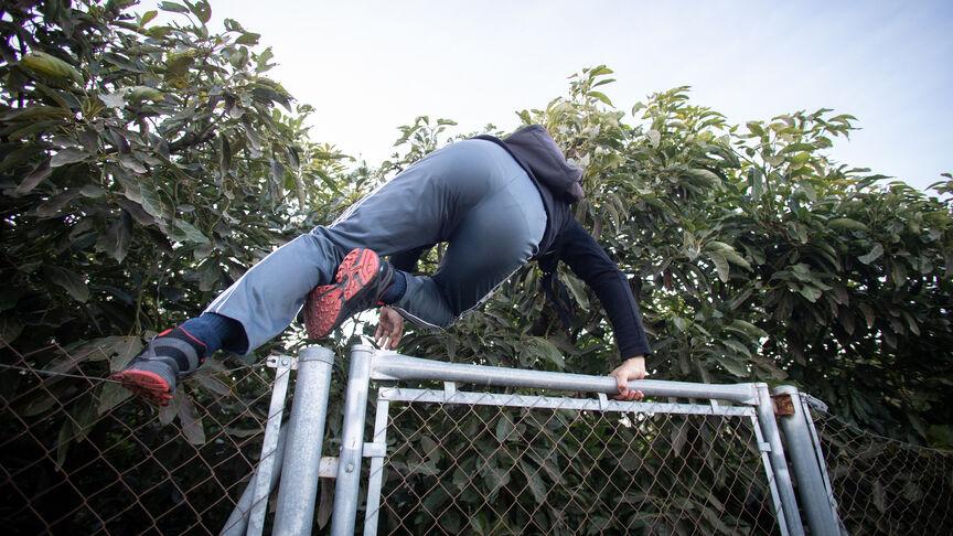 Un pensionista por invalidez que cobra 1.700 euros por ese concepto, salta vallas todos los días para robar aguacates. Foto publicada por El Español